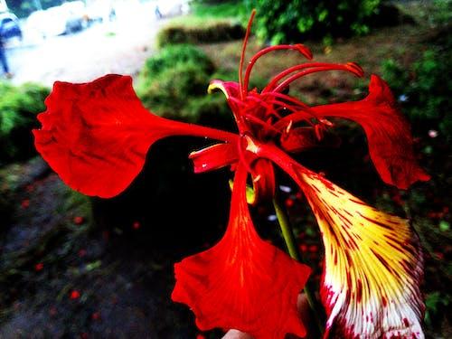 ayrıntı, çiçek, Portakal içeren Ücretsiz stok fotoğraf