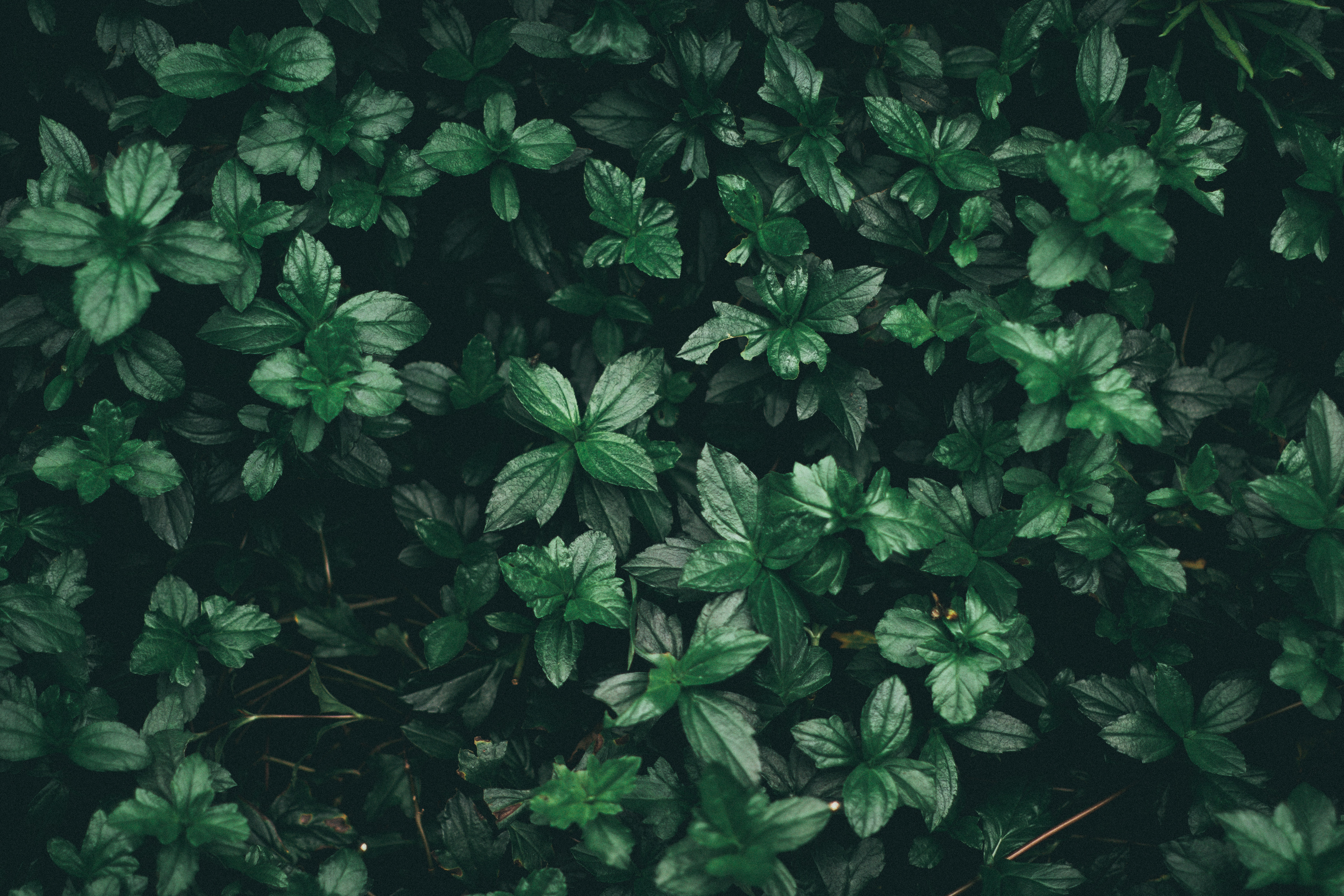 Leaf drops Wallpaper Plants Nature Wallpapers in jpg format for free