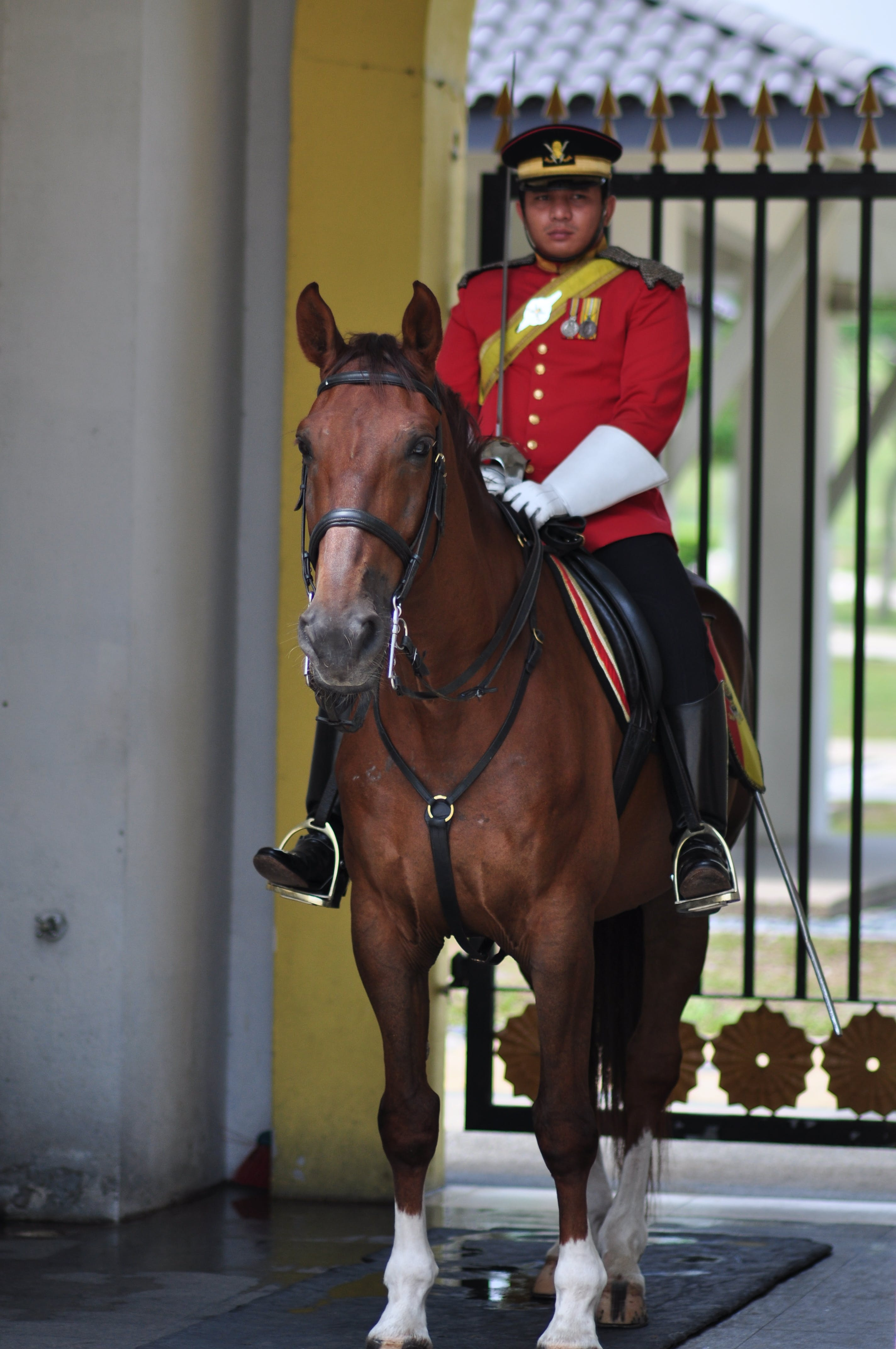 Free stock photo of army, guard, horse, palace