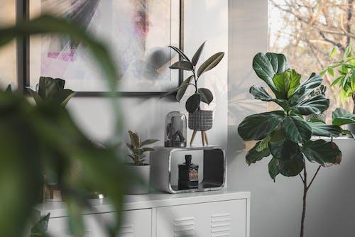 Fotobanka sbezplatnými fotkami na tému črepník, dekorácia, dom