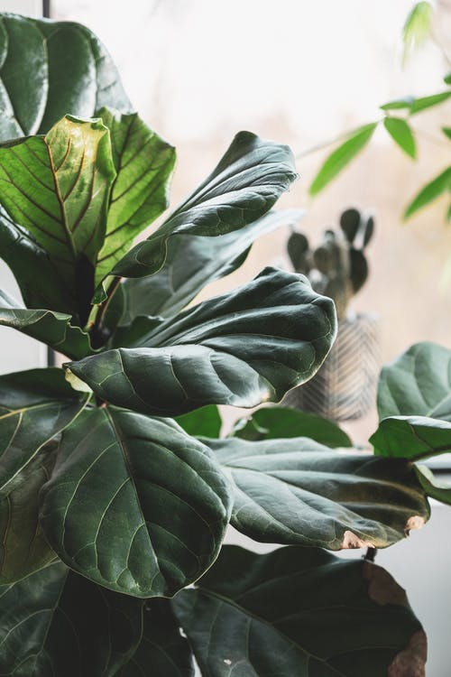 Fotobanka sbezplatnými fotkami na tému botanický, čerstvosť, dozrievanie