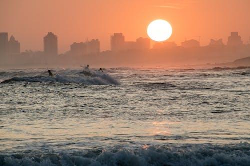 Gratis arkivbilde med bølge, hav, silhuett
