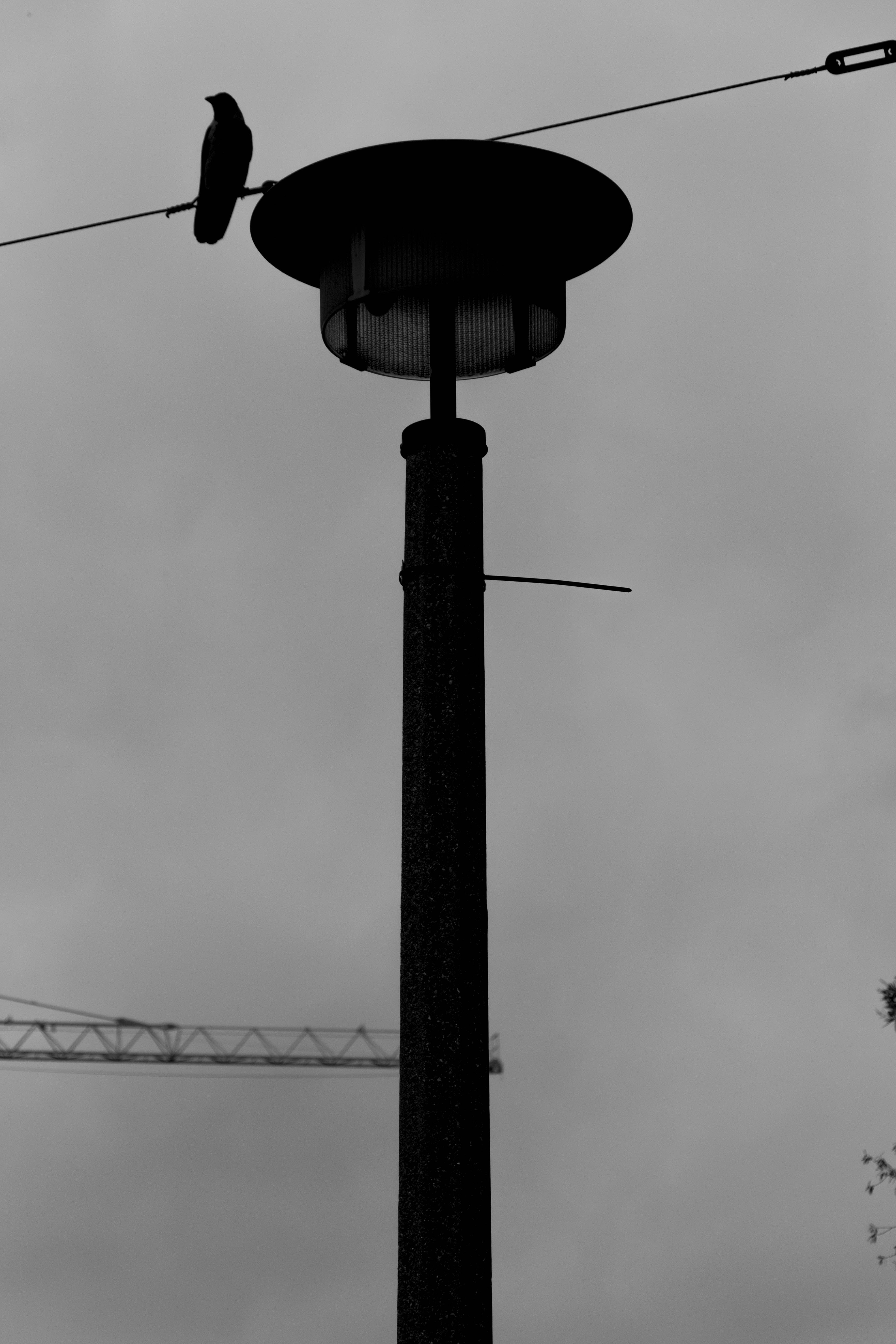 Free stock photo of bird, construction, lamp, depression