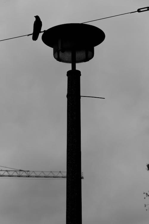Darmowe zdjęcie z galerii z budowa, czarno-biały, depresja, lampa