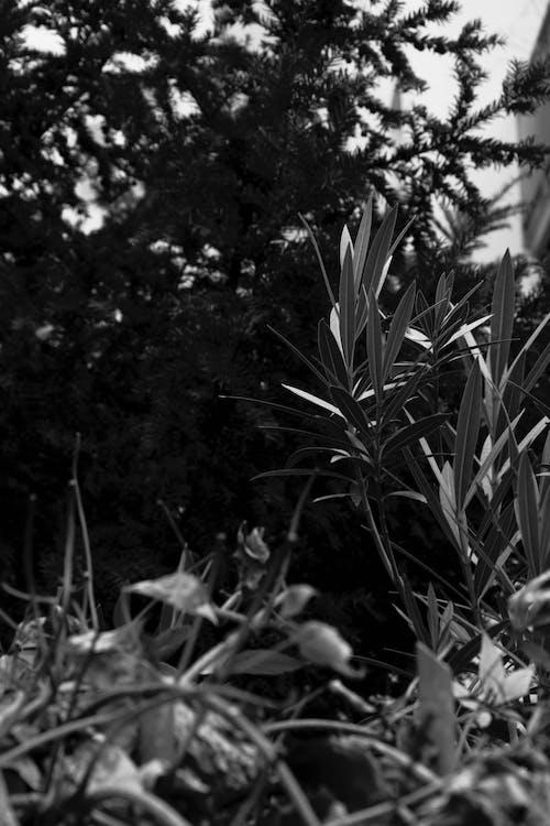 Ingyenes stockfotó fekete-fehér, gyárak, organikus, városi növények témában