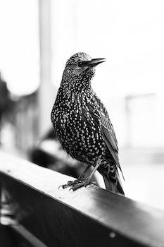 Free stock photo of bird, animal, blur, beak