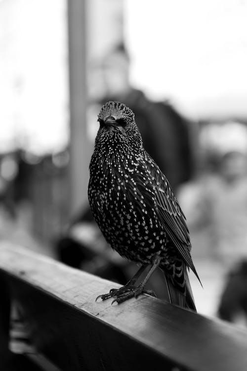 Darmowe zdjęcie z galerii z czarno-biały, perspektywa, portret zwierzęcia, zwierzę