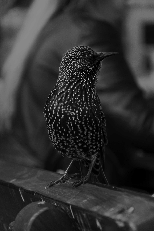 Black Feathered Bird Selective Focus Photography