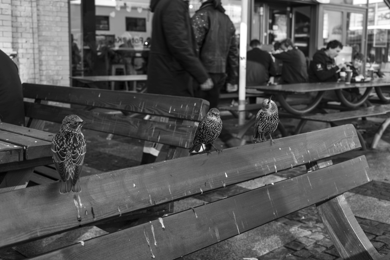 Free stock photo of animal, animal portrait, bird, black and white