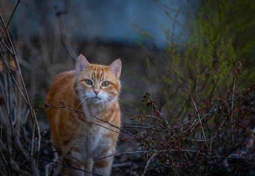 Orange Tabby Cat Walking on the Ground