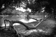 Gray Scale Photography of Body of Water Surround by Trees