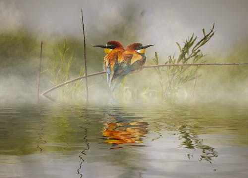 Free stock photo of animals, bird watching, flying birds