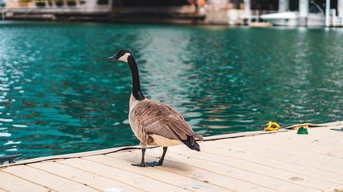 Foto profissional grátis de água, animais selvagens, ao ar livre