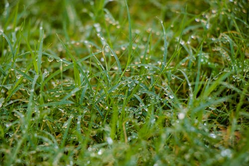 Free stock photo of dewdrop, dewdrops, dewdrops on grass
