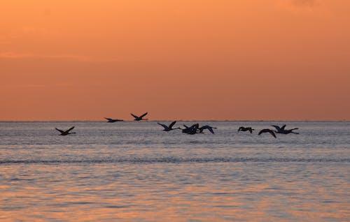 Gratis lagerfoto af baltic, flyve, hav, landskab