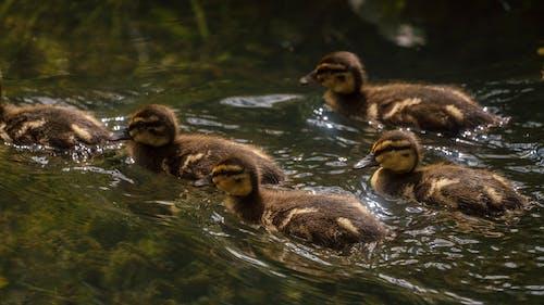 Photos gratuites de animal, bassin, bébé