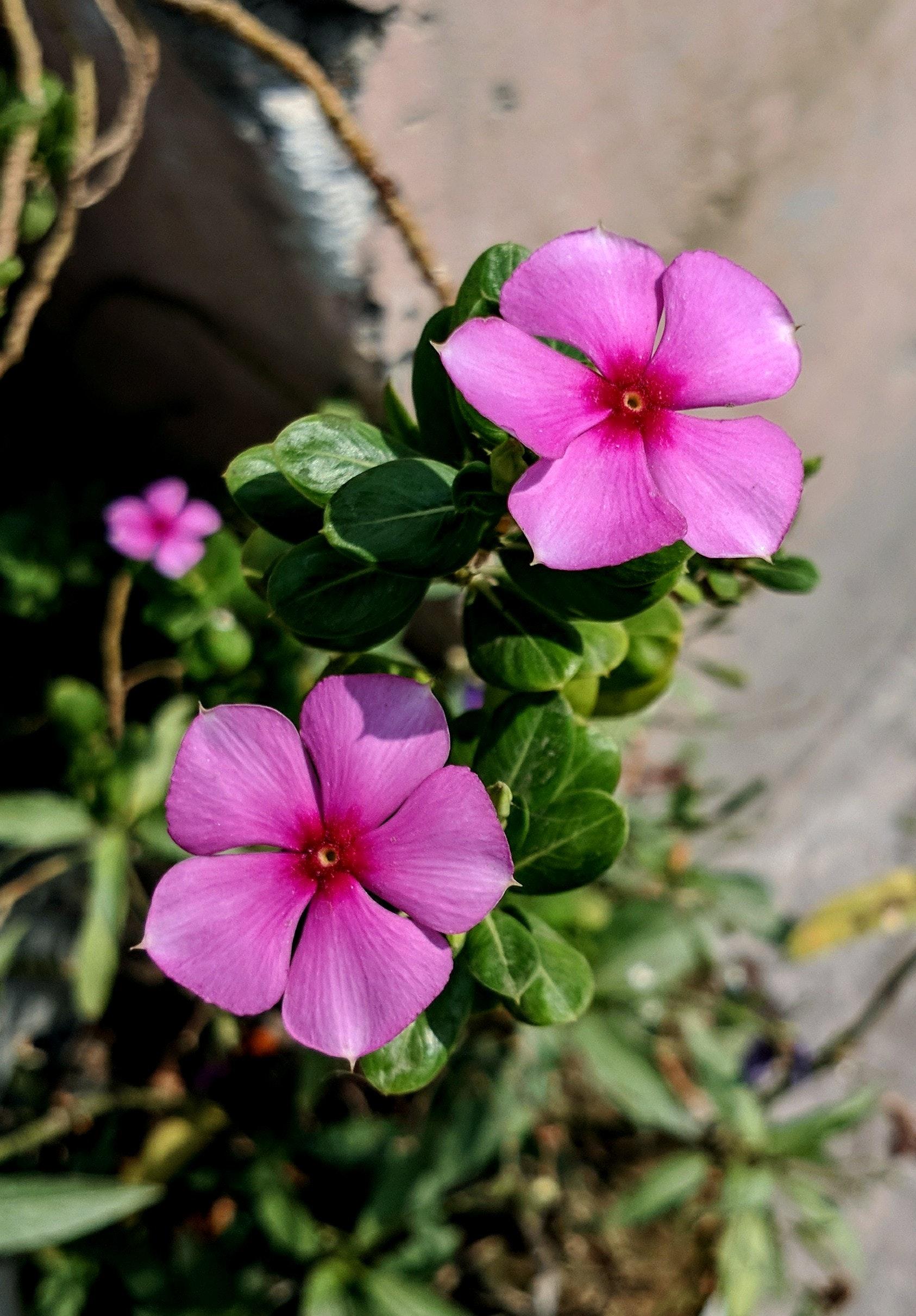 Free stock photo of beautiful flowers, flowers, fresh flowers