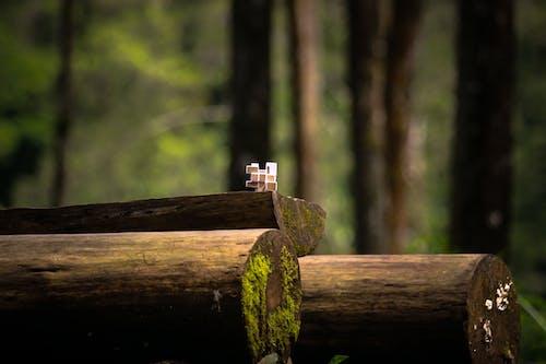 Free stock photo of blurr, blurred background, brown, garden