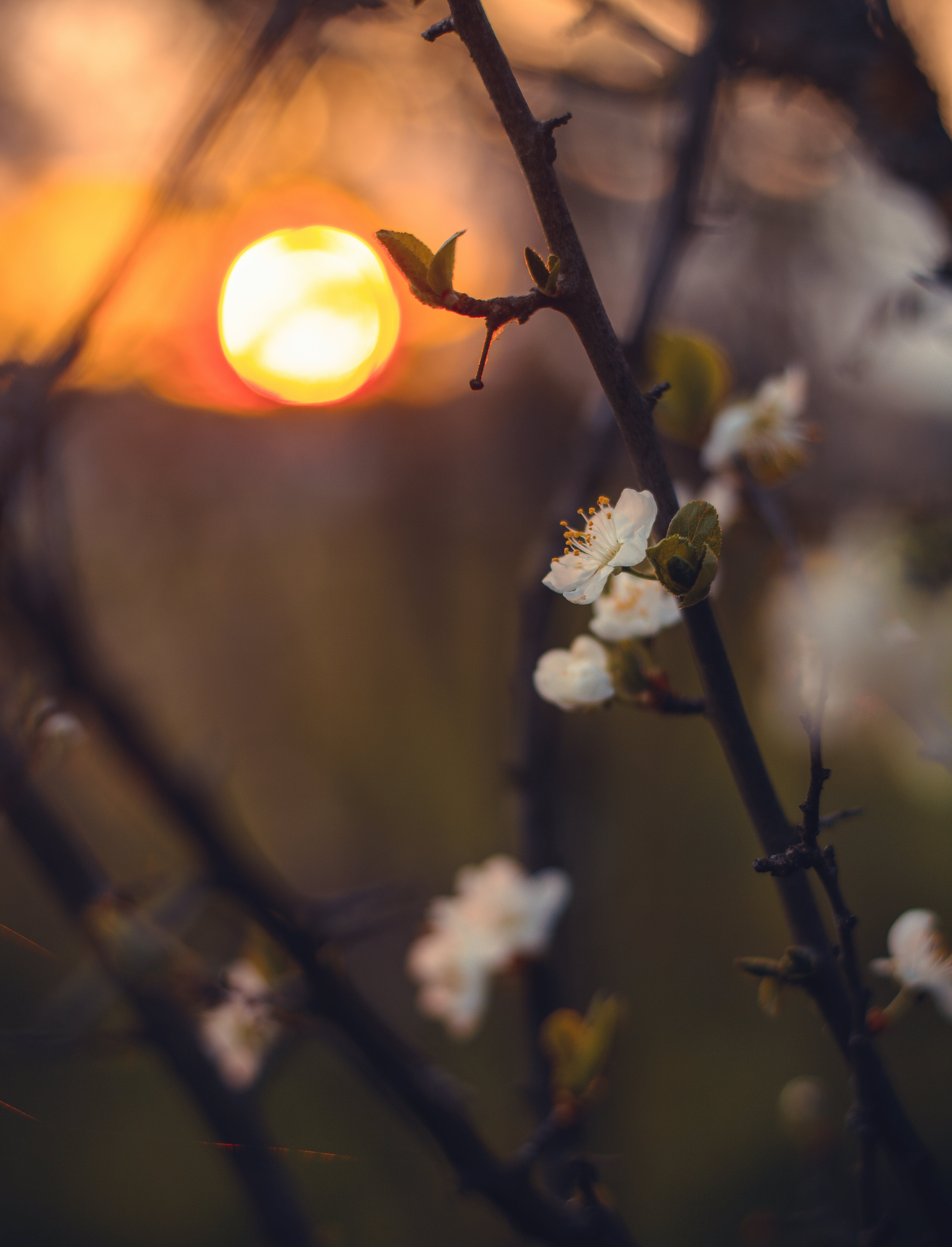 Close-Up Photography of Flowers During Sunset