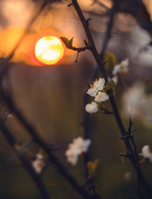 Immagine gratuita di alba, bellissimo, concentrarsi, delicato