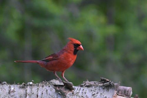 Free stock photo of avian, bird, feathers