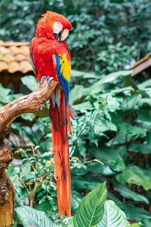 Free stock photo of animal, beak, bird