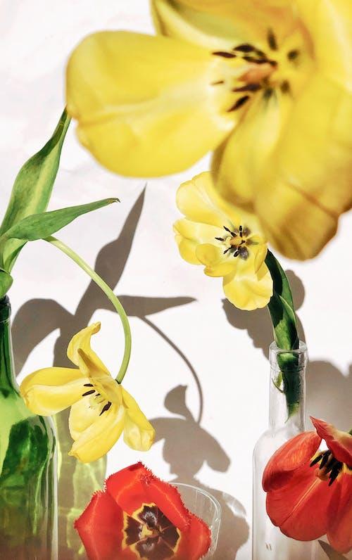 Gratis stockfoto met afzonderlijk, blad, bloeiend