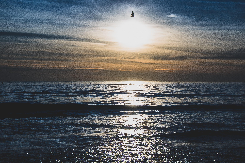 Gratis lagerfoto af aften, blåt vand, bølger, gylden time