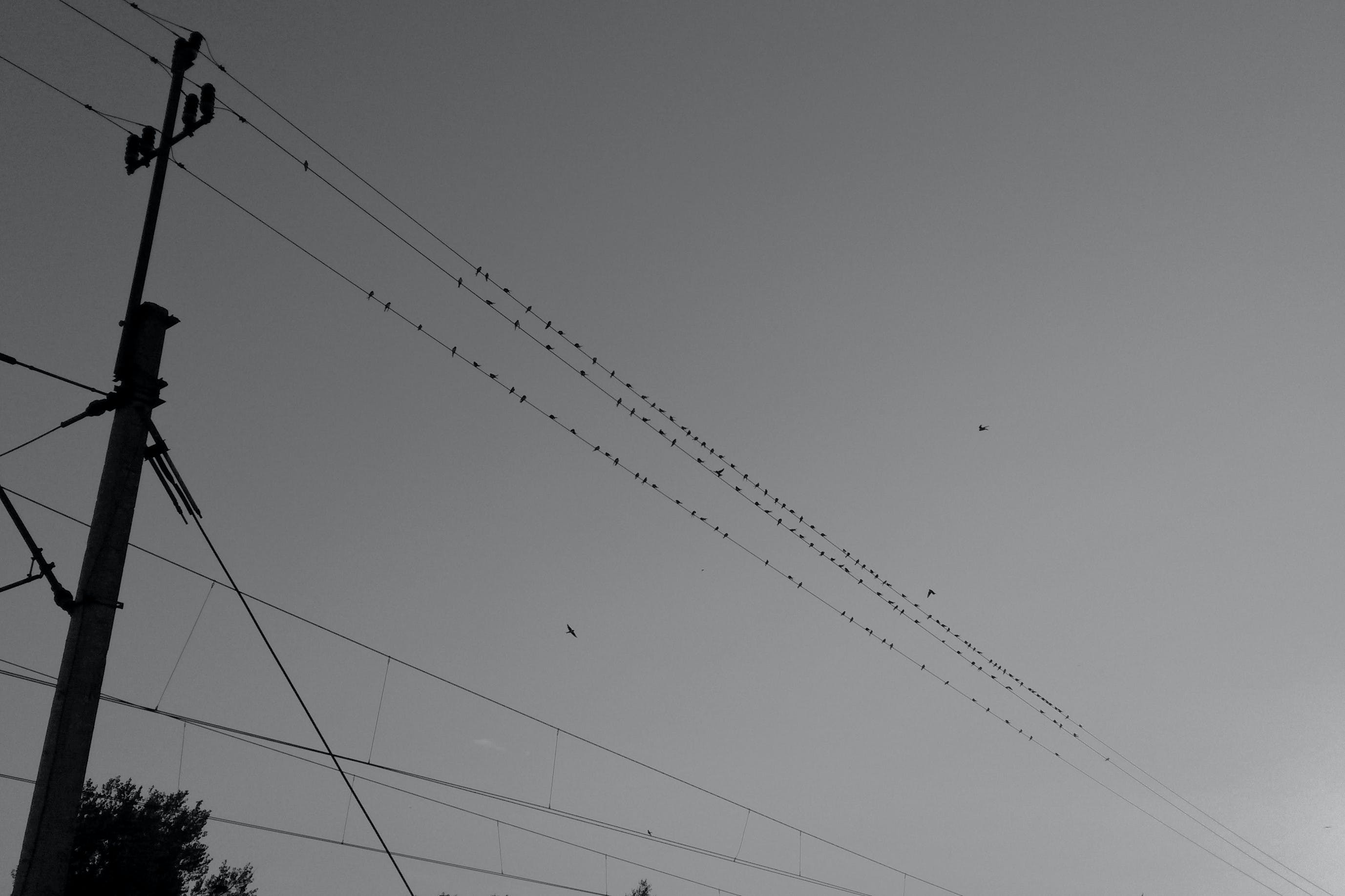 Free stock photo of birds, cables