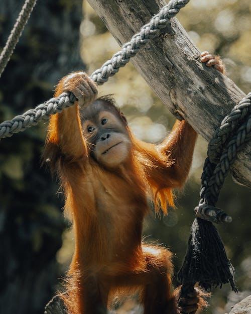 Brown Monkey on Gray Tree Branch