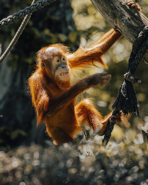 Free stock photo of animal, daylight, mammal