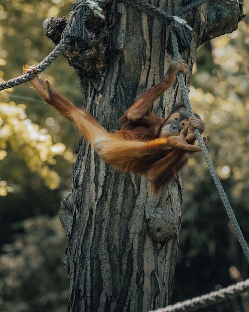 Free stock photo of animal, climb, fur
