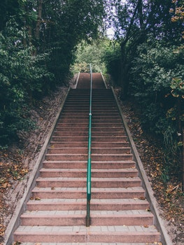 Free stock photo of stairs, trees, railing, perspective