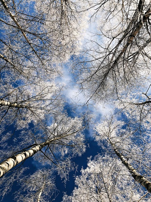 Free stock photo of birch, branch, cold