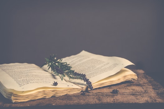 Sepia Photography of Green Plant on Top of Open Book