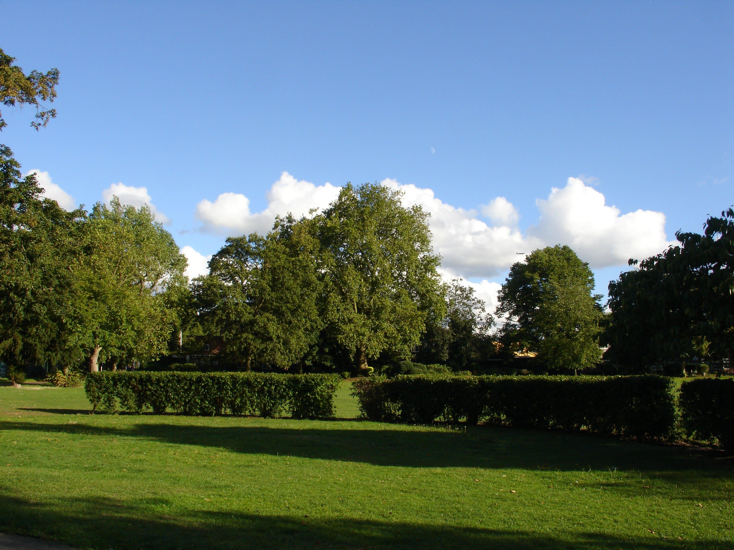 Free stock photo of sky, trees, grass, park