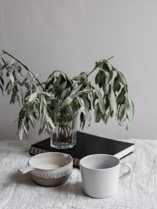 Kostnadsfri bild av avslappning, bambu, blad