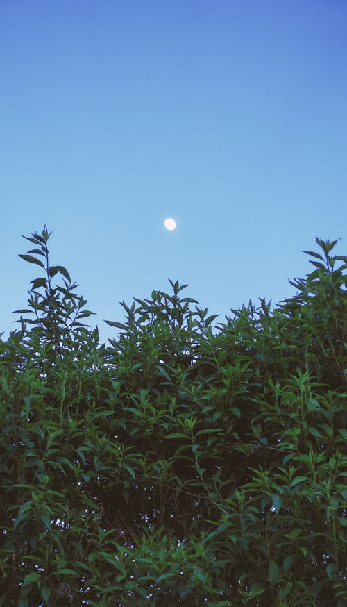 Free stock photo of afternoon, blue, bush