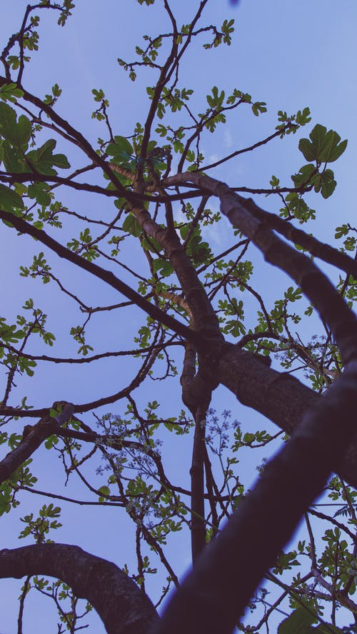 Free stock photo of afternoon, blue, branches