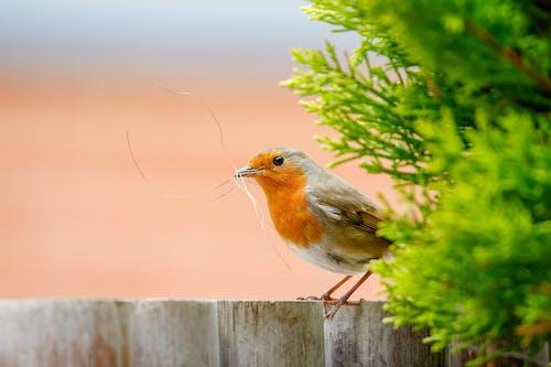 Imagine de stoc gratuită din @în aer liber, animal, animale sălbatice