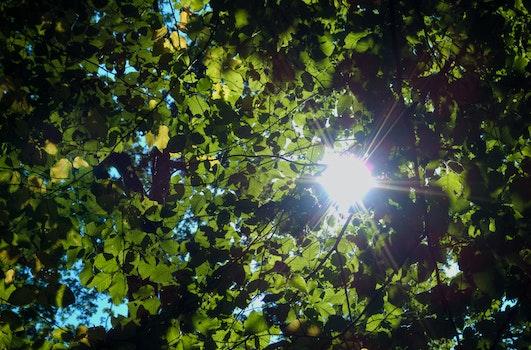 Free stock photo of summer, sun, leaves