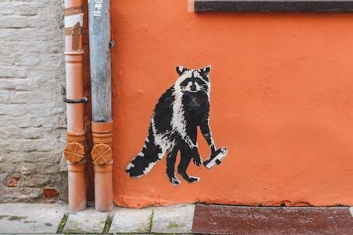 Fotobanka sbezplatnými fotkami na tému bežať, graffiti, medvedík čistotný, oranžová stena