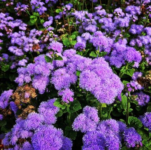 Darmowe zdjęcie z galerii z delikatny, flora, gromada, kwiat