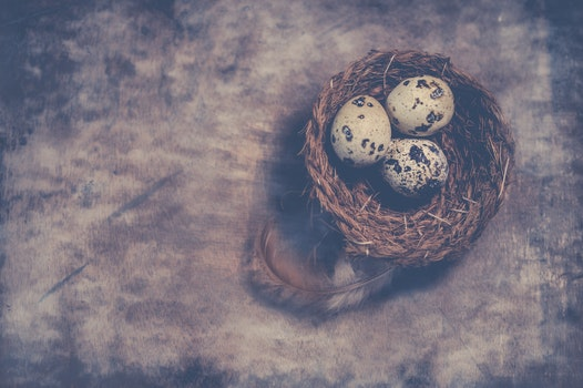 Close-Up Photography of Quail Eggs on Nest