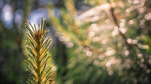 Free stock photo of cobweb, conifer, coniferous, forest