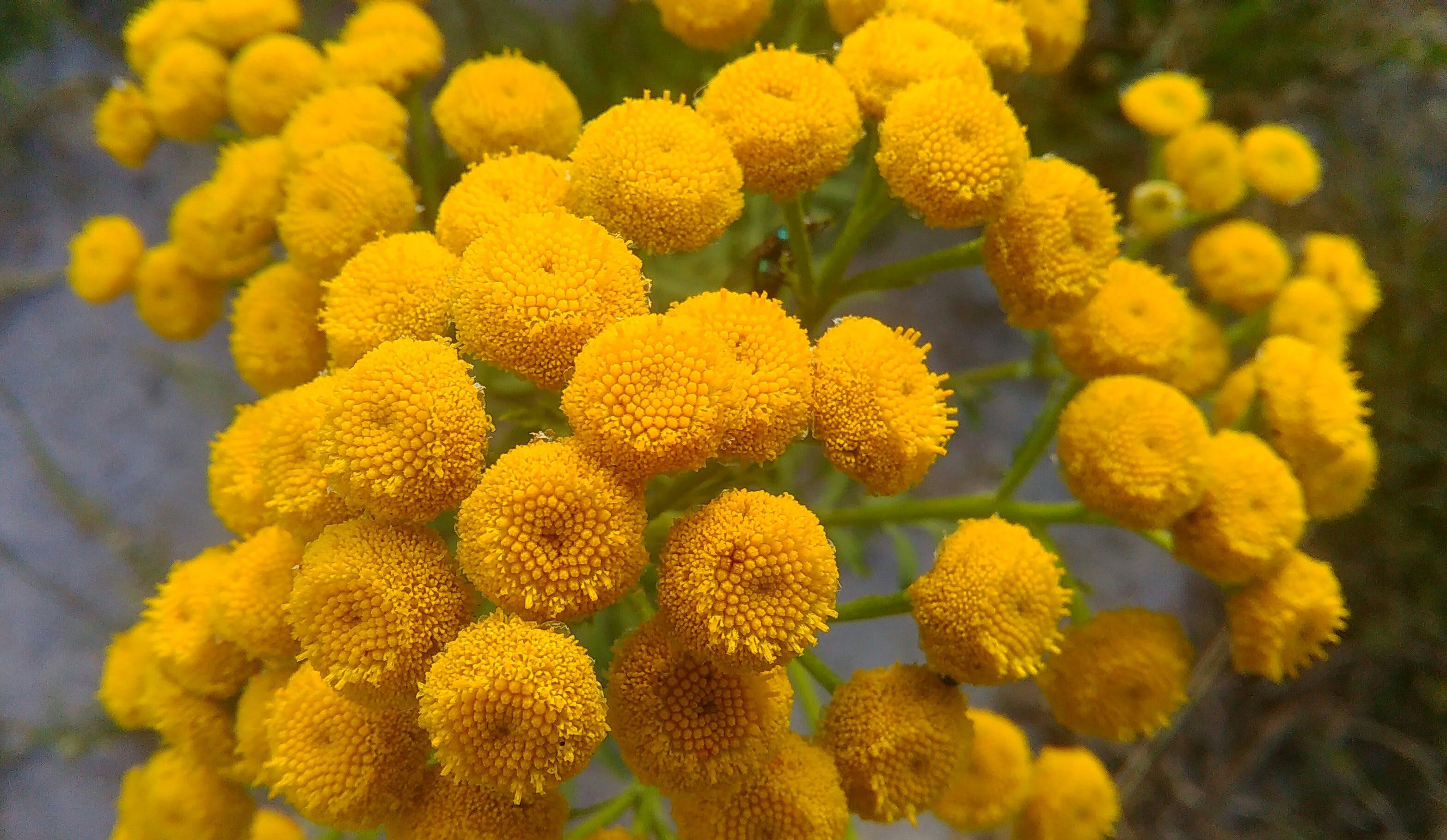 Free stock photo of yellow, flower