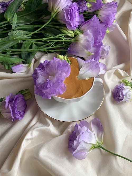 Foto stok gratis bunga ungu, cangkir, kain