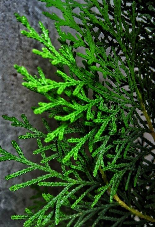 Immagine gratuita di diventa verde, felce, foglie verde scuro