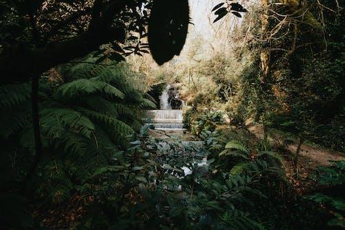 Foto profissional grátis de cachoeiras, cascata, cascatas