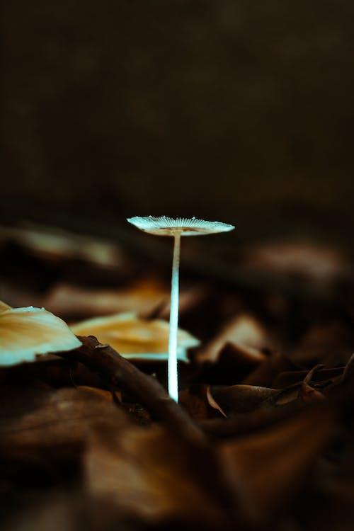 Foto d'estoc gratuïta de bolets, natura, naturalesa